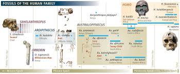 human evolution tree desert yields oldest hominid