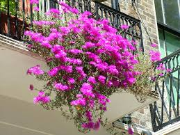 Balcony Planters Decorating With Flowers Home Decorations Insight Decorative Indoor Front Porch Planter Ideas Diy