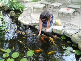 Aquascape Patio Pond 40 by Pond Installation Maintenance Contractor Reading Berks County Pa
