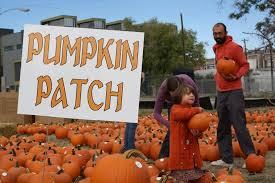 Pumpkin Patch Fort Collins may farms pumpkin patch u0026 harvest fest colorado haunted houses