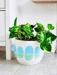 Pot Plants For The Bathroom by 100 Best Bathroom Pot Plants Artificial Plants U0026