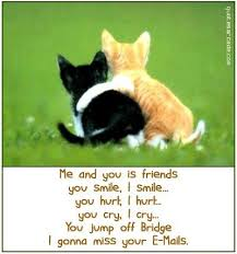 cat quotes cats best funniest cat quotes quotes and humor