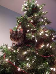 Which Christmas Tree Smells The Best Uk by How To Cat Proof Your Christmas Tree Apartment Therapy