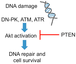 Stacks On Deck Urban Dictionary by Biomolecules Free Full Text Turning On The Radio Epigenetic