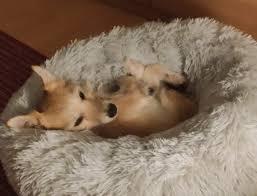 darf der hund im schlafzimmer schlafen geliebte haustiere