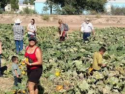 Las Cruces Pumpkin Patch Maze by 3 Corn Mazes Where You Can Have Fun Getting Lost