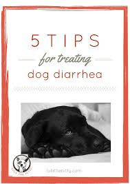 Turkey And Pumpkin For Dog Diarrhea by 13 Best Images About Animals On Pinterest Toys For Dogs And
