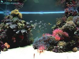 Reef Aquascaping Tips Saltwater Aquarium Ideas For Reef Tank ... Is This Aquascape Ok Aquarium Advice Forum Community Reefcleaners Rock Aquascaping Contest Live Rocks In Your Saltwater Post Your Modern Aquascape Reef Central Online There A Science To Live Rock Sanctuary 90 Gallon Build Update 9 Youtube Page 3 The Tank Show Skills 16 How Care What Makes Great Large Custom Living Coral Aquariums Nyc