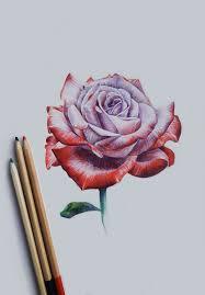 Drawing rose …