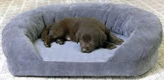 serta orthopedic quilted pillow top dog bed x large brown top paw