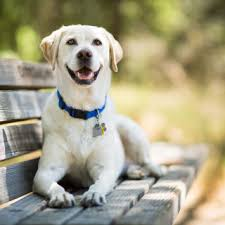30 Dog Breeds That Shed The Most by 30 Best Small Dog Breeds List Of Top Small Dogs With Pictures