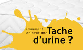 enlever urine de sur canapé comment nettoyer l urine d un canapé fiche pratique sur lavise fr