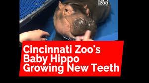 Cincinnati Zoo Halloween by Video Parent Herald