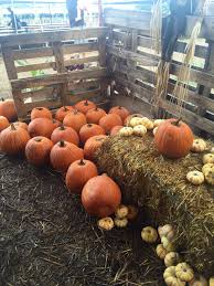 Waimanalo Pumpkin Patch And Corn Maze by October 2015 Flight Of Feather