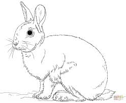Bunny Rabbit Coloring Pages Rabbits Free For Kids