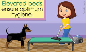 Do Miniature Pinschers Shed by The Real Reasons Why You Should Get An Elevated Dog Bed