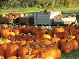 Pittsburgh Area Pumpkin Patches by Pumpkin Patch Time Harvest Valley Farms Invite You To Pick A