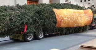 Christmas Tree Rockefeller 2017 by 2017 Rockefeller Center Christmas Tree Arrives In New York City