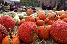 Pumpkin Patch Pittsburgh Pa 2015 by Fall Festival At Trax Farms Pennsylvania Haunted Houses