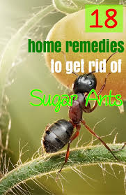 Try natural home reme s to rid of sugar ants if you don t