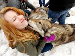 Ya Pumpkin Pie Hair Cutted Freak by Thanks To Reddit I Got To Meet Some Wolves And Got Lots Of Kisses