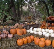 Pumpkin Patch Fresno Clovis by Hillcrest Pumpkin Patch Reedley Ca Koddler