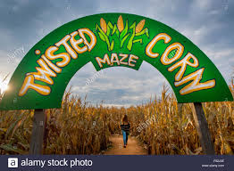 Snohomish County Pumpkin Patches Corn Mazes by Corn Maze Usa Stock Photos U0026 Corn Maze Usa Stock Images Alamy