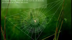 comment l araignée construit sa toile espace des sciences