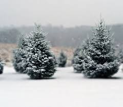 Christmas Tree Hill Shops Lancaster Pa by Discover Lancaster Lancaster County Pa Amish Country