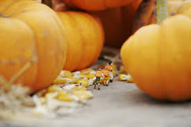 Pumpkin Patch Petaluma California by Jason Barnhart Photography