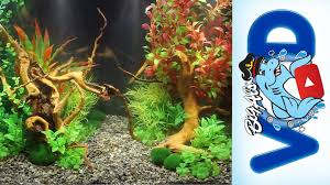 How To Use Fake Aquarium Plants To Create Stunning Natural ... Images Tagged With Aquascape On Instagram Aquatic Eden Aquascaping Aquarium Blog Aquascape Pinterest How Much Does It Cost To Run A Fish Tank Tropical Site 20 Of The Most Beautiful Places On Planet This Is Why You Can Natural Httpwwwokeanosgrombgwpcoentuploads2012 Takashi Amano Creator Of The Nature Love Aquascapenl Twitter Hardscape Axolotl Fish And Aquariums Planted Red Green By Adrian Nicolae Design