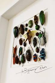 Wall Decoration Art Frame With Real Butterflies Beetles Or Other Insects