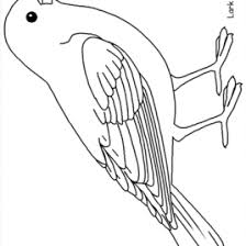 Printable Coloring Pages Of Birds AZ