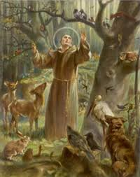 francis of assisi the patron of environment st