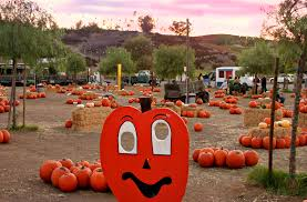 Apple Hill Pumpkin Patches Ca by 10 Best Pumpkin Patches In The Inland Empire K Frog 95 1 Fm And