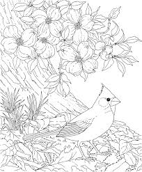 Free Printable Coloring PageNorth Carolina State Bird And Flower Cardinal