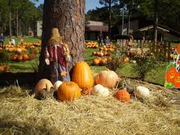 Pumpkin Patch Houston Tx Area by Fall Festivals U0026 Events Calendar Houston Chronicle