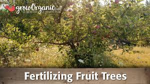 Natural Fertilizer For Pumpkins by Fertilizing Fruit Trees Organic Gardening Blog