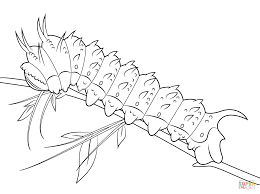 Click The Hubbards Silkmoth Caterpillar Coloring Pages
