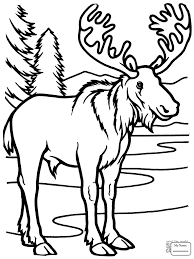 1530 best baby images on moose coloring pages best of mammals baby moose moose coloring pages