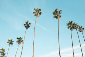 100 Mary Ann Thompson Palmtrees1209185_1920 ReMax Solutions