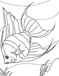 Tropical Fish Coloring Page Free Printable Pages
