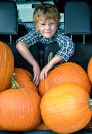 Burts Pumpkin Farm 2015 by Super Special Guest Editor 5 Year Old Noah Explorer Of The World