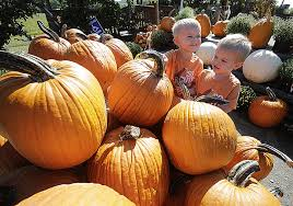 Patterson Farm Pumpkin Patch Ohio by Here Are 5 Things To Love About Fall News The Repository
