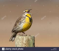 100 Meadowlark Trucking Canada Post Stock Photos Canada Post Stock Images Page 2 Alamy