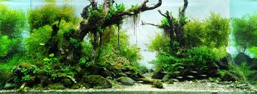 ADA Aquarium | Acuarios | Pinterest | Aquariums, Aquarium ... Aquascape Of The Month June 2015 Himalayan Forest Aquascaping Interesting Driftwood Placement Aquascapes Pinterest About The Greener Side Aquascaping Design Checklist Planted Tank Forum Simons Blog Decoration Bring Nature Inside Home Ideas Downhill By Arie Raditya Aquarium 258232 Aquaria Creating With Earth Water Fire Air Space New Aquascapemarch 13 2016page 14 Page 8 Aquapetzcom Magical Youtube 386 Best Tank Images On Aquascape