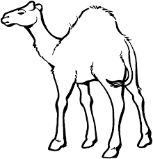 Camel Preschool Coloring Pages Zoo Animals