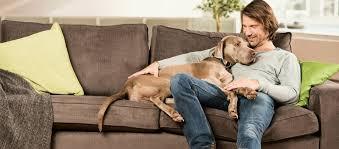 wohnen mit hunden tipps tricks fressnapf