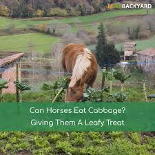 Can Horses Eat Cabbage? Giving Them A Leafy Treat (Dec, 2017) Tennessee Weather Sleipnir Morgan Horse Farm Blog Build Compost Pile And Spread Manure Little Backyard World In My Life Of Lisa Laporte Electric Tape Fence Home Gardens Geek Becca Gem Backyard Horse Jumping Youtube Free Images Fence Animal Wall Shed Paint What Exactly Is A Roan Expert Advice On Care Order Blind Lonely Getting Older California Finds New Friend Sculpture Patricia Borum Cqright Otographs The Assembled 14 Camp Expo Pics Catskill Arabian Horses Texas Ranch Sullivan