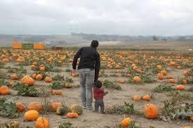 Petaluma Pumpkin Patch Corn Maze Map by The Great Peter Pumpkin Patch In Petaluma 510 Families